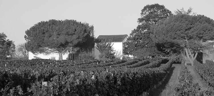 Château Hostin le Roc - vue du domaine